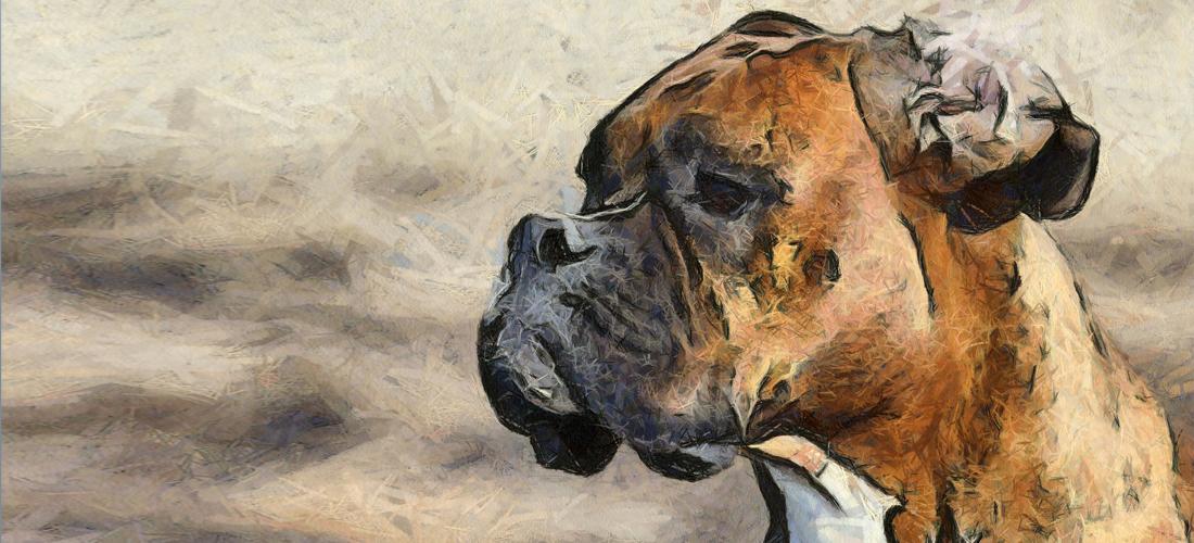 Tiere Malen Und Zeichnen Wertvolle Tipps Für Interessierte